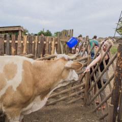 Загороднаяэкскурсия «В гостях у фермера»