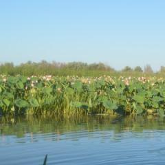 «Астраханский биосферный заповедник» — экскурсия познакомит с заповедной природой региона.