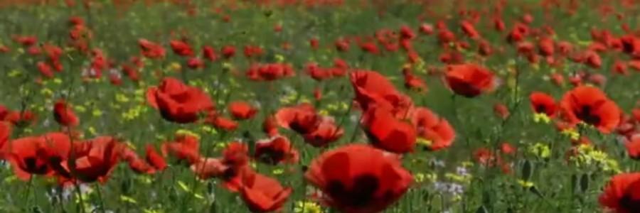 Астрахань цветущая