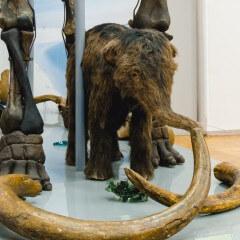 Экскурсия «В гостях у мамонтенка»