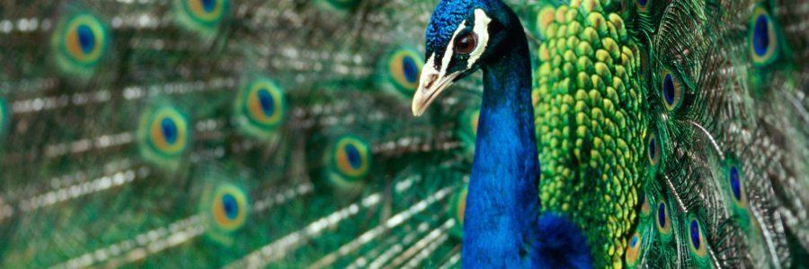 Зоопарк баба Фрося