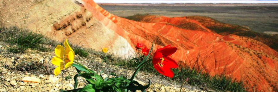 Межрегиональный творческий фестиваль «Степной тюльпан Богдо» приглашает к участию